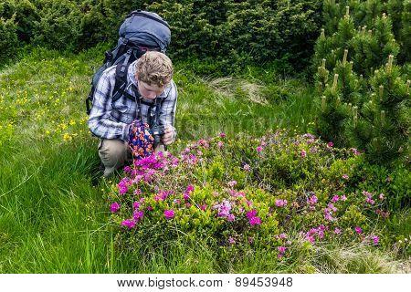 Tourist Takes Photos Of Rhododendron