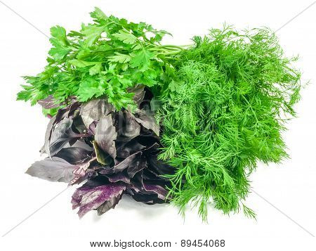 Bunch Of Basil, Parsley And Dill