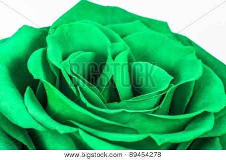 Closeup Of A Beautiful Green Rose