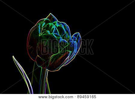 Abstract Background Made Of Tulip Flower.