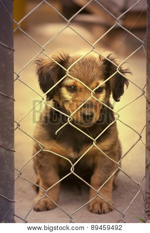 Dachshund Puppy Behind The Fence - In Retro Vintage Filter