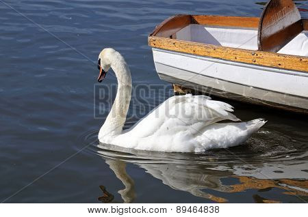 Swan and boat on River Avon.