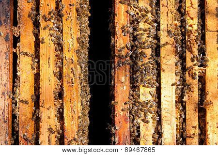 Busy Bees, View Of The Working Bees On Honeycomb.