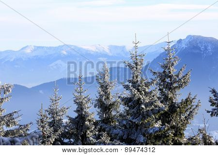 Scene with trees on winter mountains background