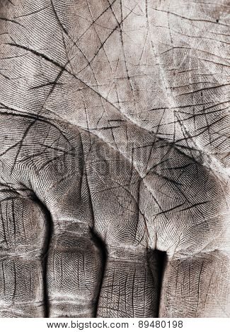 Close Up Of Human Palm