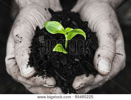 Hands And Seedling