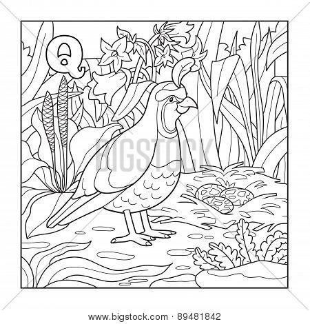 Coloring Book (quail), Colorless Illustration (letter Q)