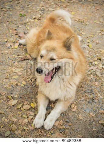 Drowsy Dog