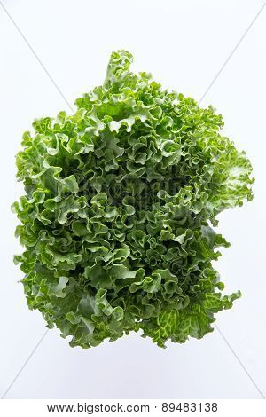 Above Head Shot Of Newly Harvested Curly Leafy Lettuce