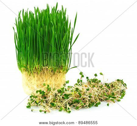 Wheatgrass With Green Radish