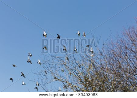 A Flock Of Birds In The Blue With No Clouds