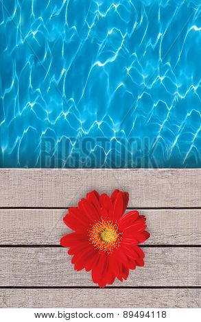 Beautiful Red Flower On Swimming Pool Wooden Deck