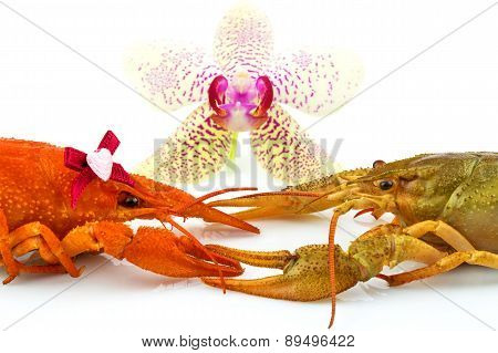 Couple Of Crayfishes With Orchid