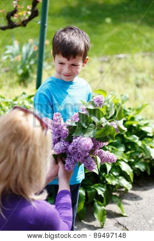 Little Boy Give Lilac To Mother