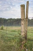 picture of barbed wire fence  - barbed wire fence on meadows - JPG