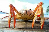 stock photo of cooked crab  - Close up of Sea crab on the table near the sea - JPG