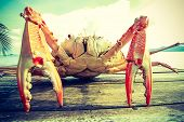 foto of cooked crab  - Close up of Sea crab on the table near the sea - JPG