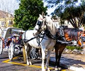stock photo of carriage horse  - Horse drawn carriage waiting for the tourists - JPG