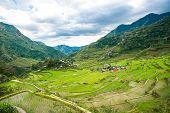 picture of rice  - Rice terraces in the Philippines. The village is in a valley among the rice terraces. Rice cultivation in the North of the Philippines Batad Banaue.