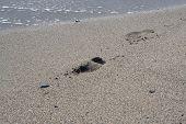 foto of footprints sand  - Footprints in the sand - JPG