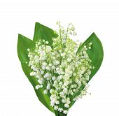 picture of white lily  - White flowers lilies of the valley isolated on white background - JPG