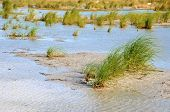 stock photo of sea oats  - Water puddled in a low lying area on the beach with sea oats and grasses - JPG