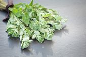 stock photo of oregano  - A bunch of fresh oregano on a dark stone background - JPG