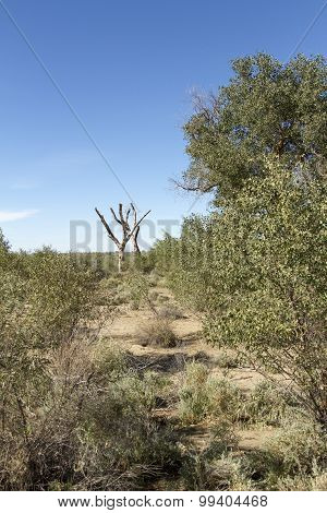 Dry Tree Trunks