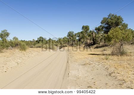 Road In The Desert Of Sand