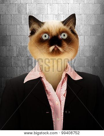 Business  Woman With Cat Head