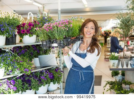 Portrait of smiling mid adult botanist carrying crate full of flower plants in shop