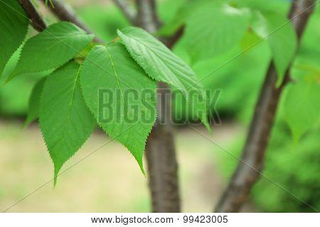Tree bark on blurred nature background