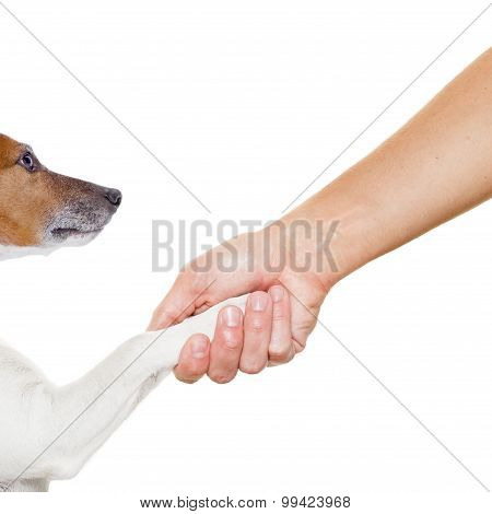 Dog And Owner Handshaking