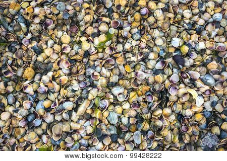 Seashells On The Coast