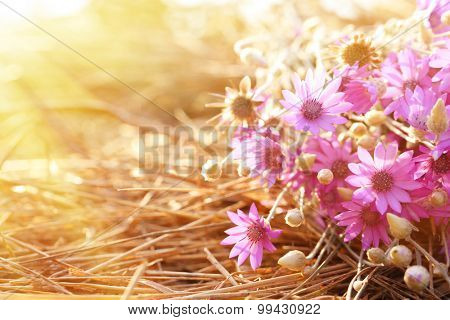 Beautiful wild flowers on straw with sunlight