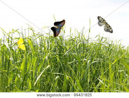 Beautiful butterflies on green grass