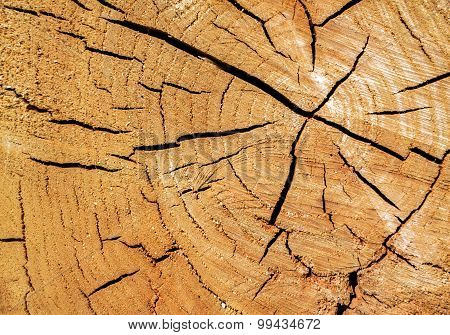 Cut Down A Tree With  Cracks