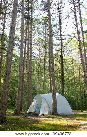 Camping Tent In Pine Tree Woods Up North