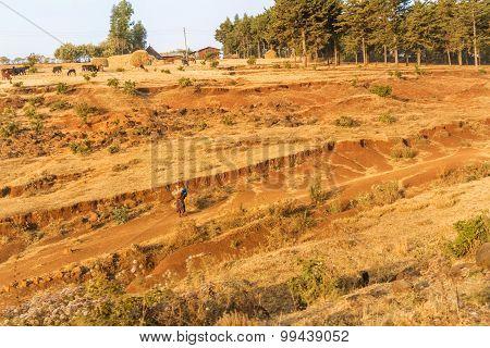 Farmland Landscape In Ethiopia