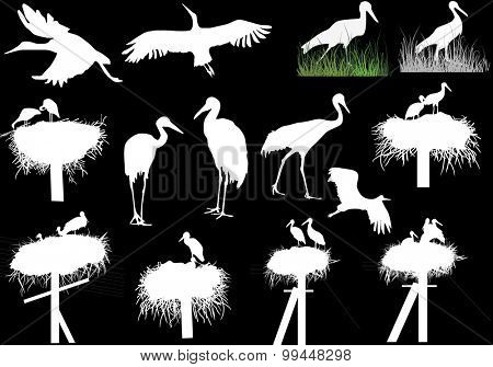 illustration with storks and cranes isolated on black background