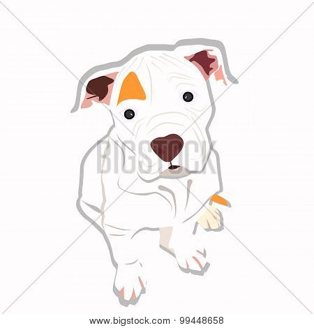 Sweet Puppy