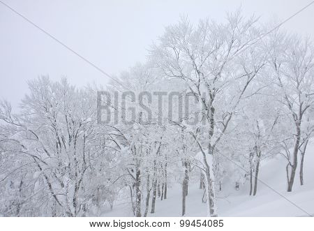 Blizzard Covered Trees