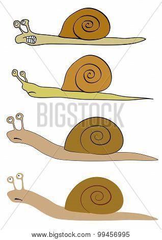 Various Snails