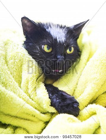 Black Cute Soggy Cat After A Bath