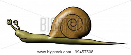 Snail - Slowly Animal