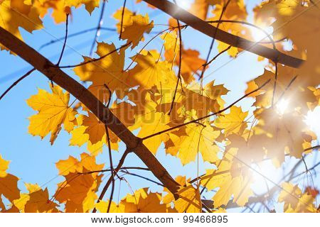 Beautiful nature - autumn leaves