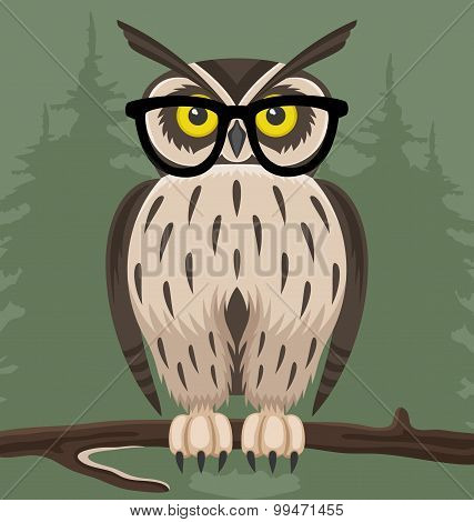 Owl on green background.