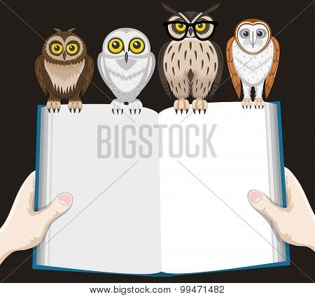 Book and owls