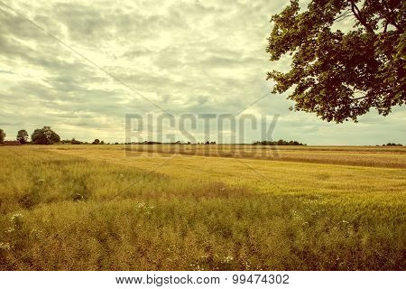 Vintage Image Cultivated Fields.