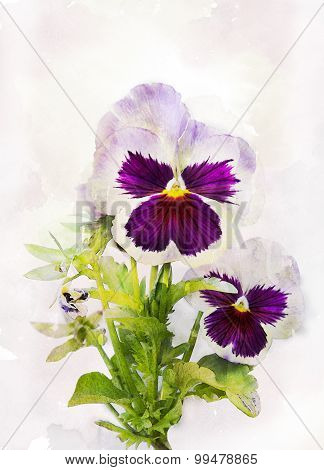 Watercolor Purple Pansy (viola Tricolor)